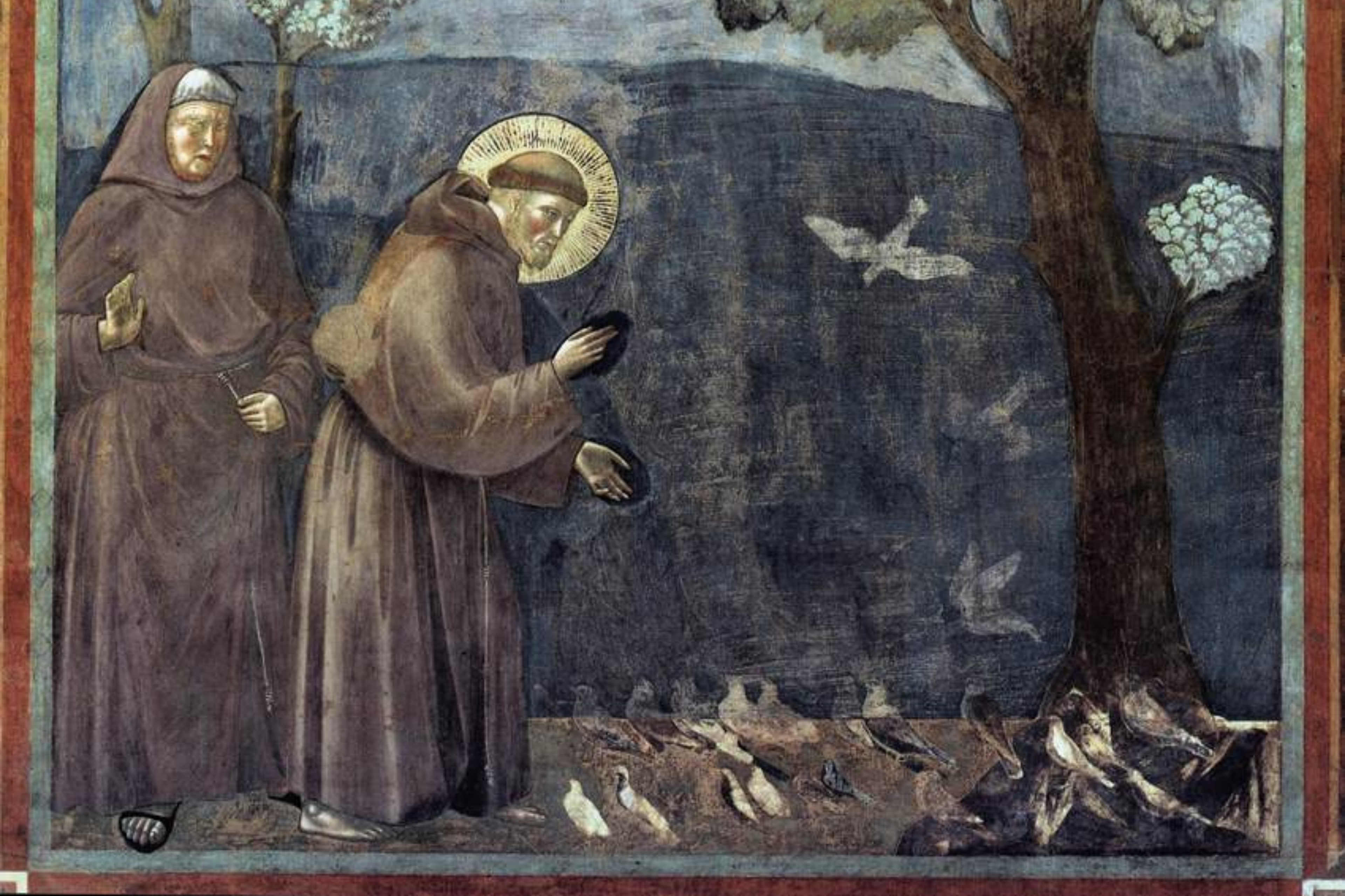 St Francis and Care for Creation